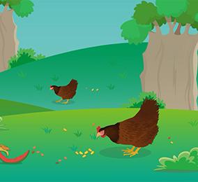 食品安全科普:土鸡蛋真的更有营养吗?