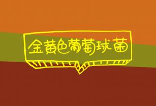 大福说:金黄色葡萄球菌食物中毒