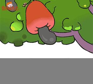 【食育】腰果是怎么生长的?(竖版  抖音快手)