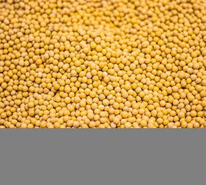 你真的了解抗草甘膦转基因大豆吗?
