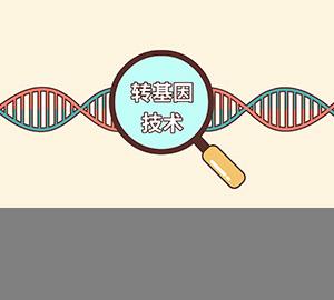 转基因技术就在我们身边